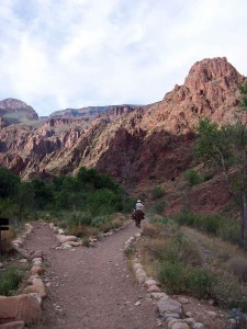 Bottom of the Grand Canyon, Phantom Ranch, mules on trail.