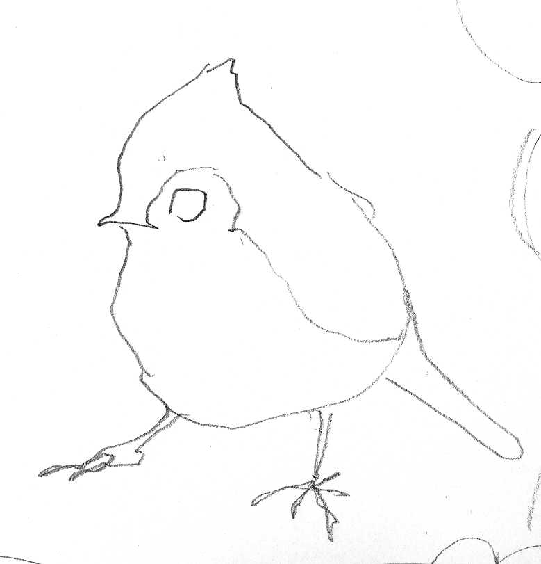 titmouse drawing by Andrea Zuill