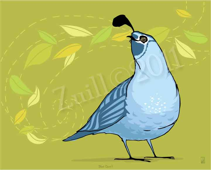Blue Quail by Andrea Zuill